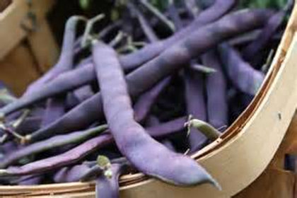 Purple Podded Pole Bean