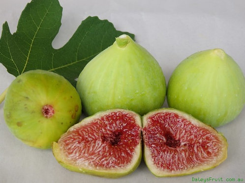 White Genoa Fig Tree
