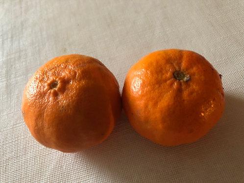 Dancy Tangerine Seed