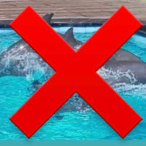 The Bali Bible and Expedia stop selling tickets to captive dolphin center in Bali