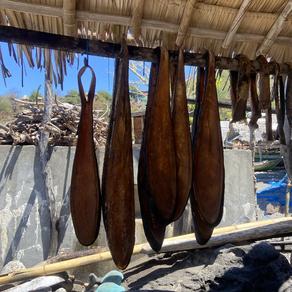 Lamalera whale hunt survey
