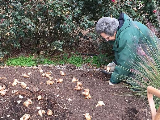 bulbplanting11-22-19b.JPG