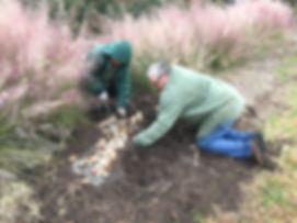 bulbplanting11-22-19d.JPG