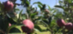 Frutteto landing