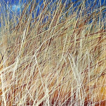 Wheat and Barley Field