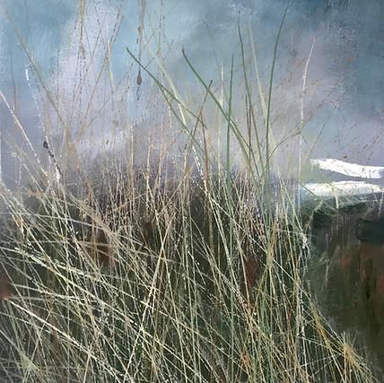 Maram Grass. (study) NFS