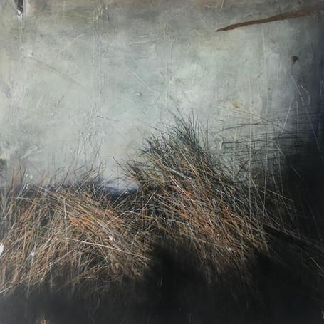 Maram Grass. Ireland