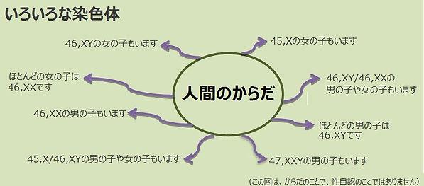 性分化疾患:様々な染色体
