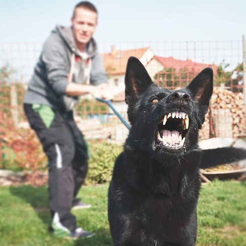 Dog Bite Rights