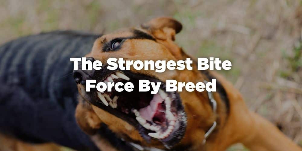 The Strongest Bite Force By Breed
