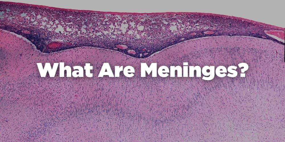 What are meninges?