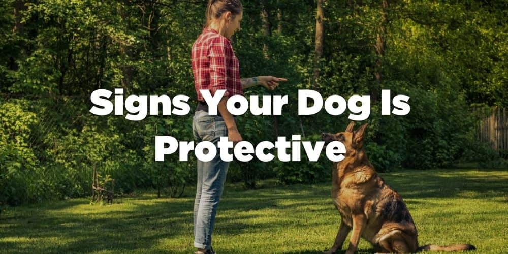 Signs Your Dog is Protective