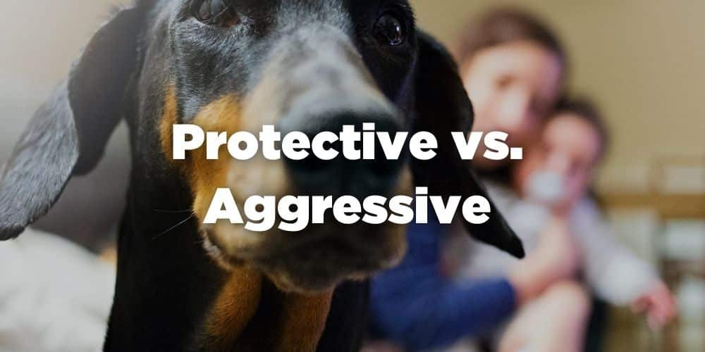 Protective Dogs vs Aggressive Dogs