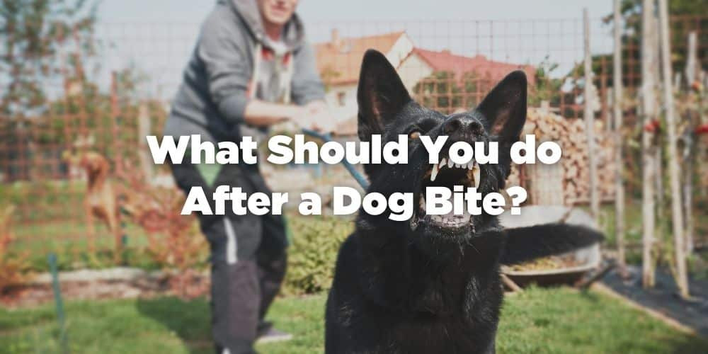 What Should You Do After a Dog Bite