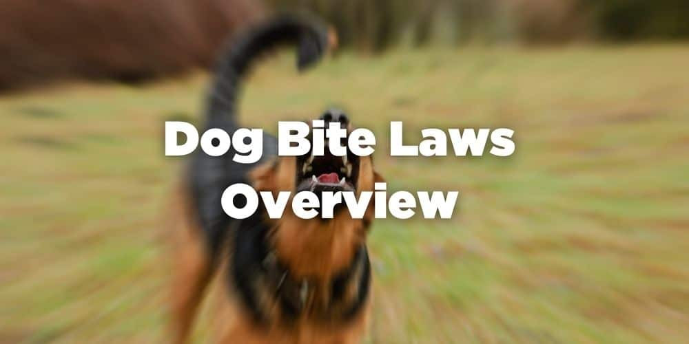 Dog Bite Laws Overview