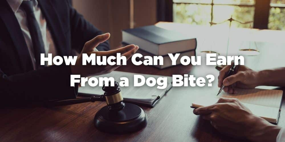 How Much Can You Earn From a Dog Bite?