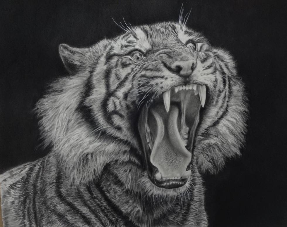 """Tiger Tongue"""