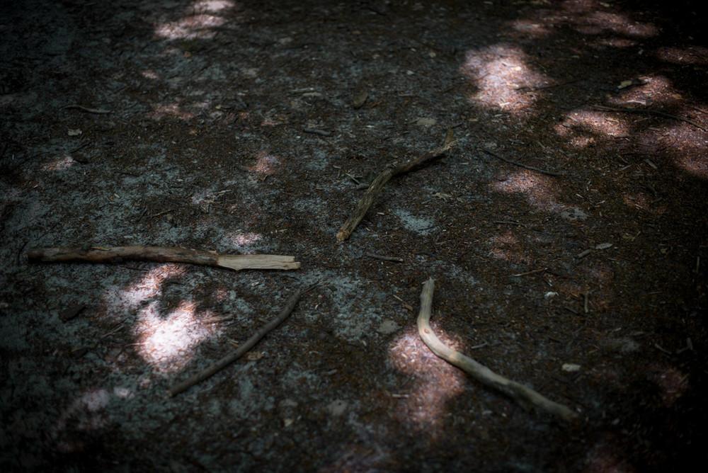 150802_forest_09.jpg