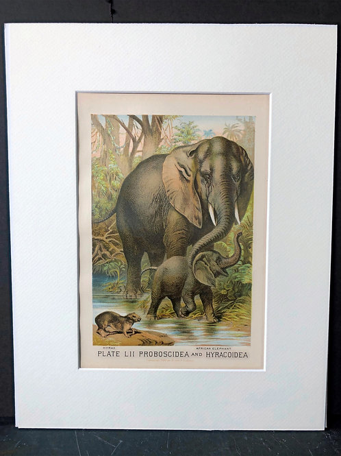 Johnson's Animals: Elephant