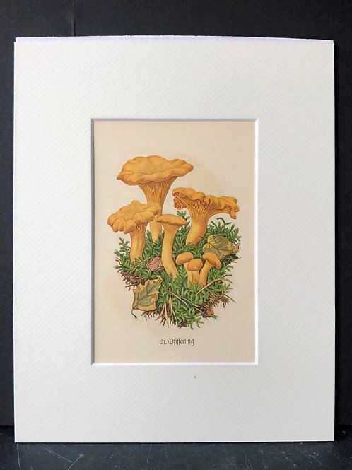 Mushrooms: Chanterelle