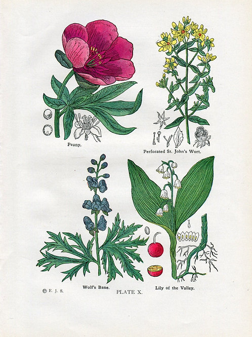 Antique Print of Medicinal and Culinary Herbs, St John's Wort, Lily of the Valle