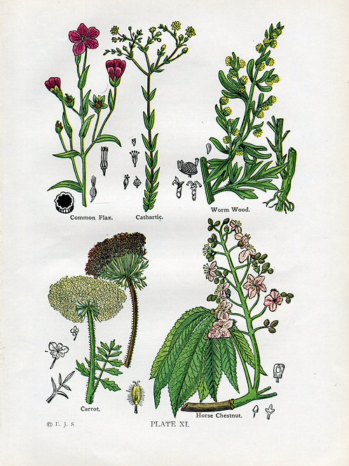 Antique Print of Medicinal and Culinary Herbs, Carrot, Wormwood, Flax, Horse Che