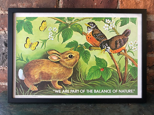 1970s Vintage School Ecology Poster: Balance of Nature