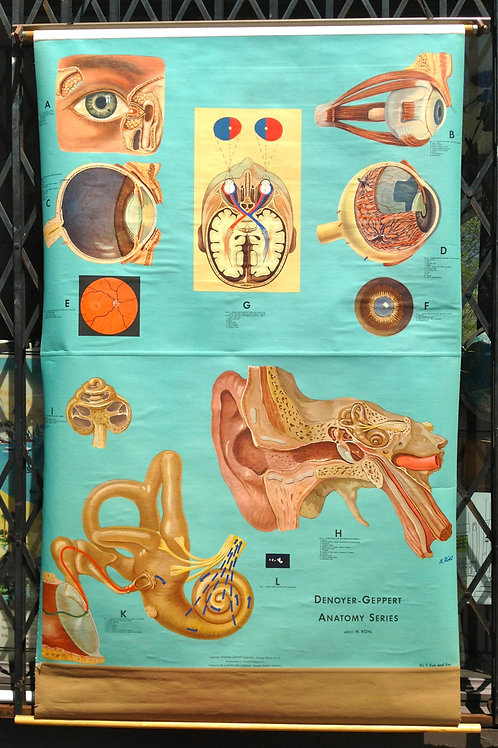 Vintage Anatomical Chart of the Eye and Ear Denoyer Geppert 1960s