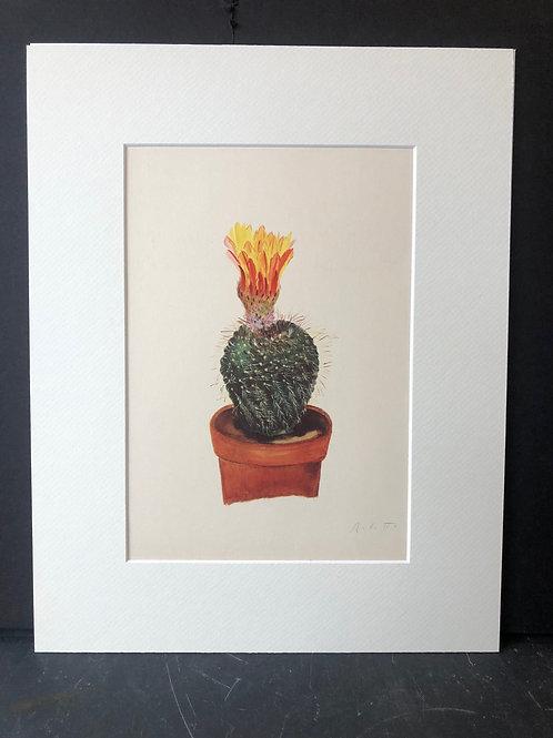 Cactus Print: Echinocactus Tabularis