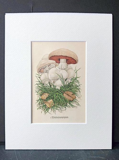 Mushrooms: White Champignons