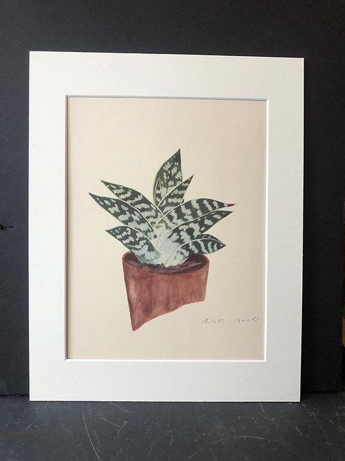 Succulent Print: Aloe Variegata