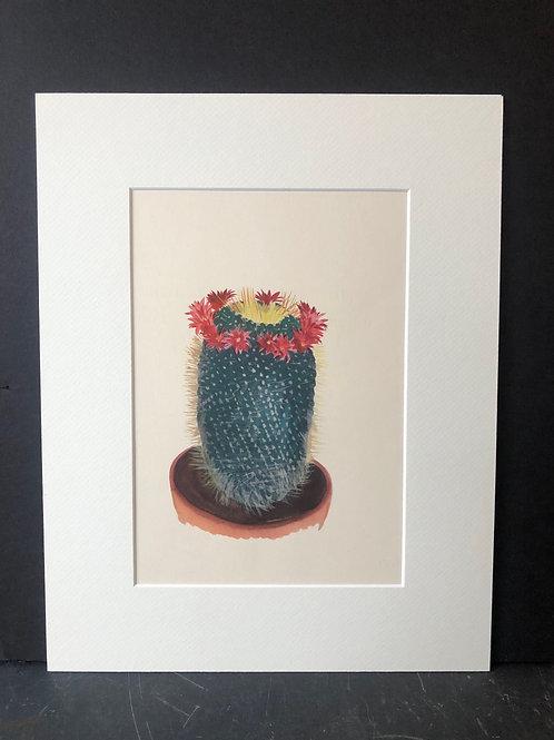 Cactus Print: Mamillaria Spinosissima Flavida