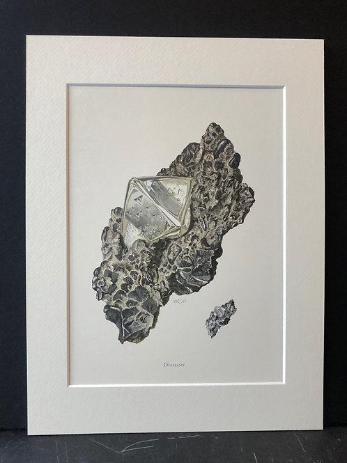 Diamond, C. Caspari, 1967
