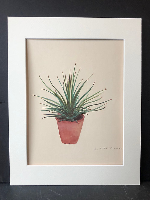 Succulent Print: Agave Striata