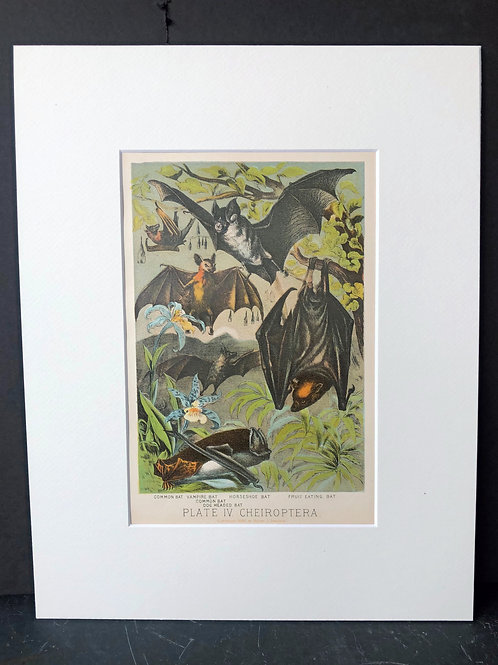 Johnson's Animals: Bats