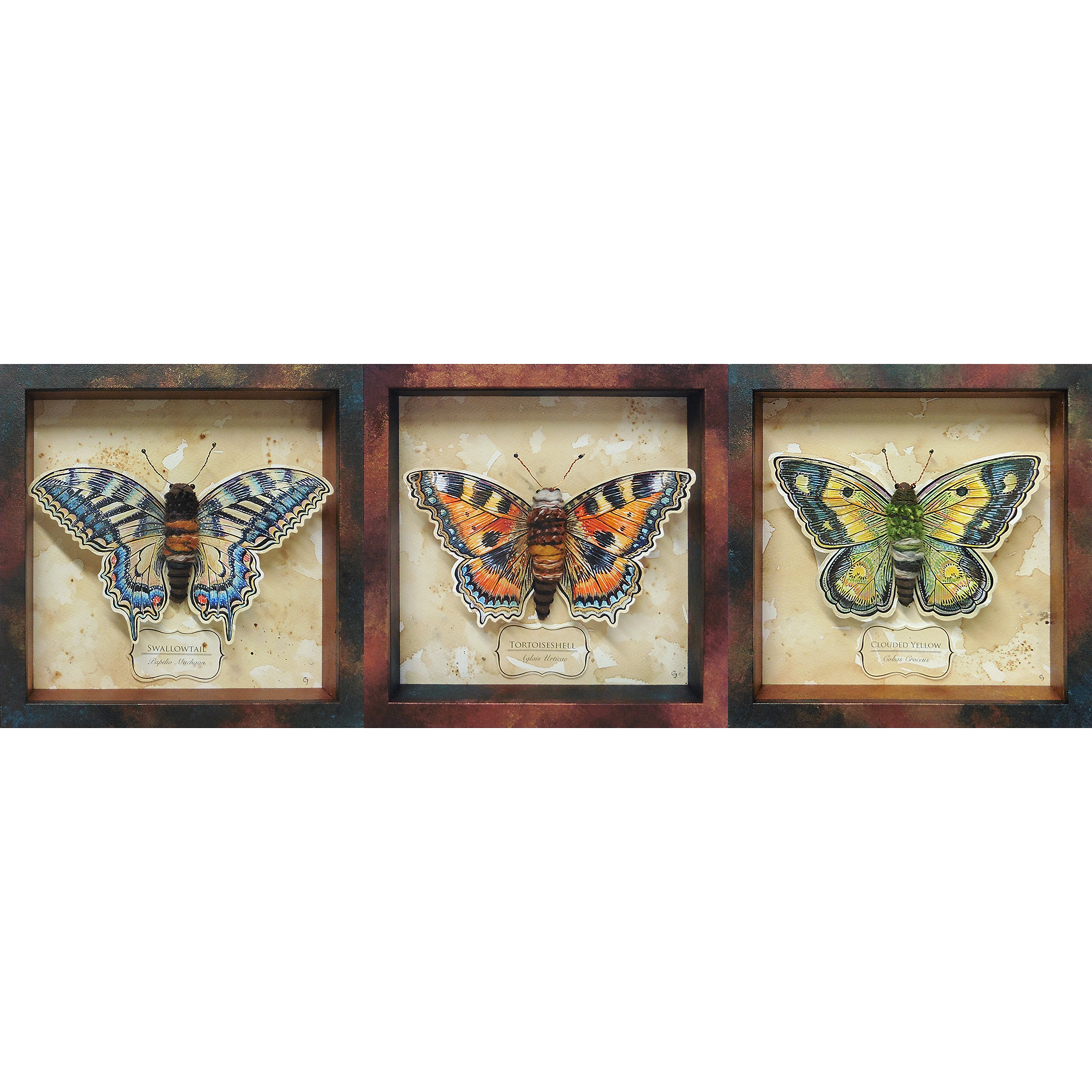 podule-emporium   Vintage Collection - Adonis Blue Butterfly