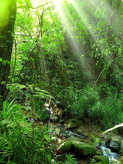 In the Mawsynram jungle.jpg