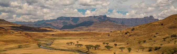 Survie Bushmen.jpg