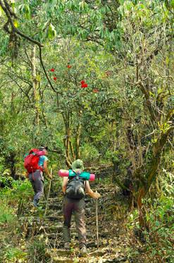 Yoga trek sous les rhododendrons en fleu