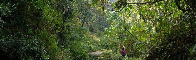 Post-monsoon subtropical forest_edited.j