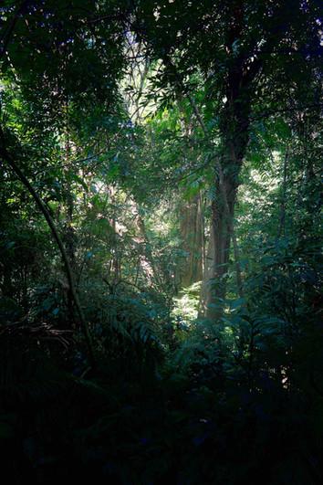 5-Light in the jungle of Elopa.jpg