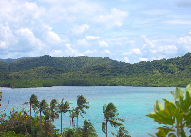 Coconut trees of Snake Island - Philippi