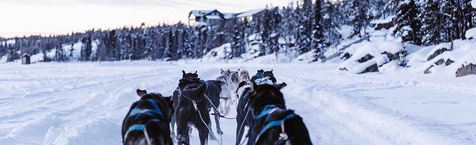 Photo musher survie.jpg