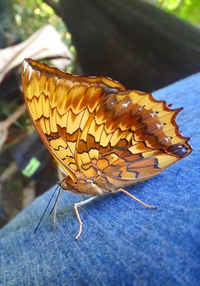 Butterfly in the jungle.jpg