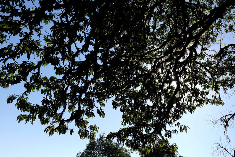 Silhouette branches.jpg