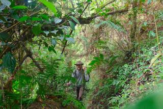 Portrait jungle Panchase copy.JPG
