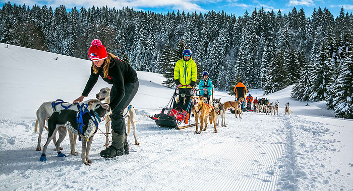 Stage_musher_soin_à_l'attelage.jpg