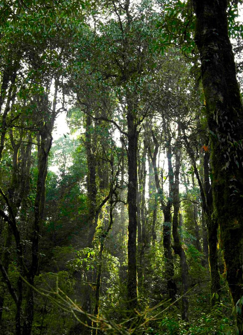 December light in the sal forest.jpg