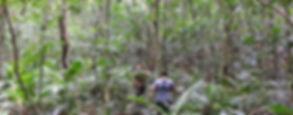 4-Foraging in Arunachal's jungle.jpg