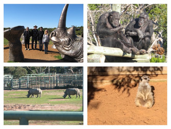 Giraffe Safari at Monarto Zoo, South Australia